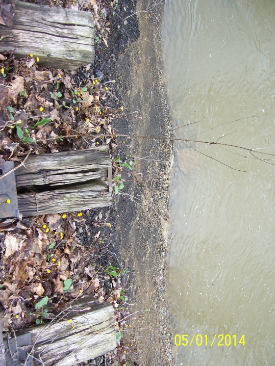 Before: severe bank erosion along Turtle Creek and the trail